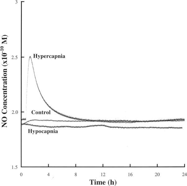 CO2 og NO i astrocytt