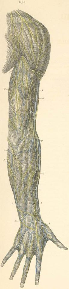 arm bakside