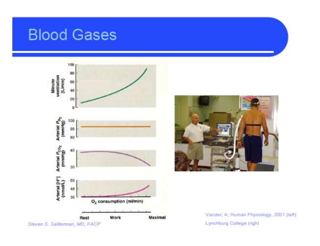 blood gases