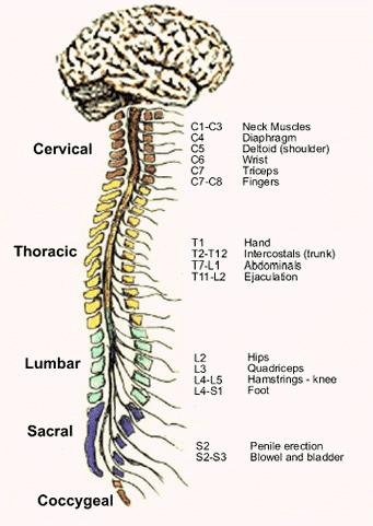 spine10_